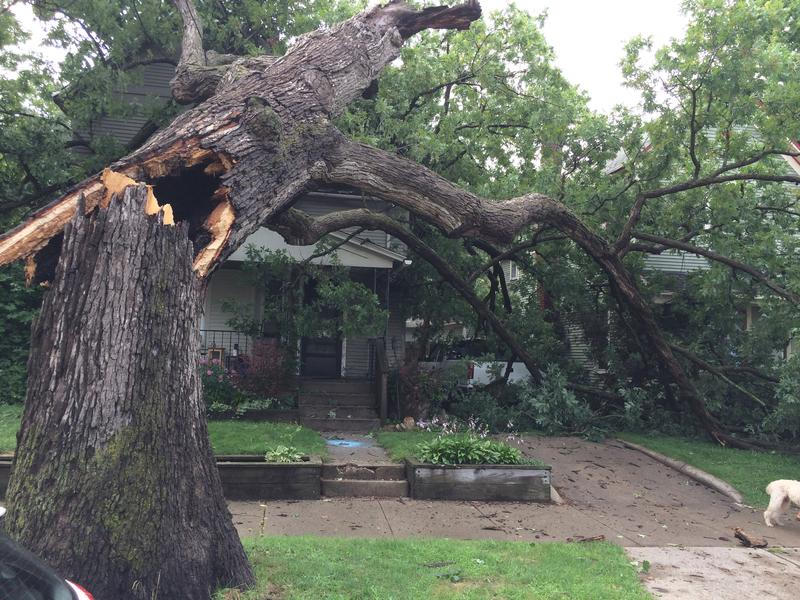 A tree split in half by storms on Fitzhugh SE in Grand Rapids.