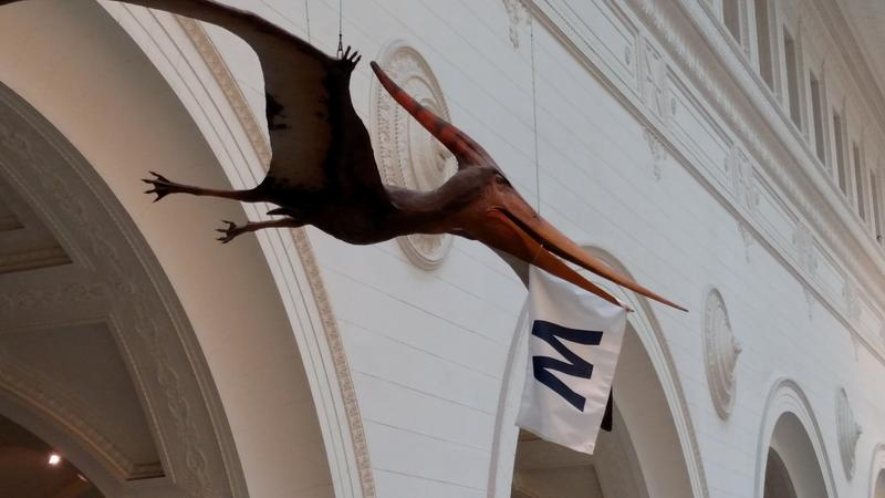 "Even the dinosaurs at the Field Museum of Natural History in Chicago were excited about the Cubs' first World Series win since 1908. This one is flying the ""W"" flag, which is customary after a Cubs victory."