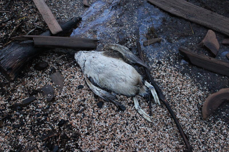 The carcass of a bird found on an Upper Peninsula beach.