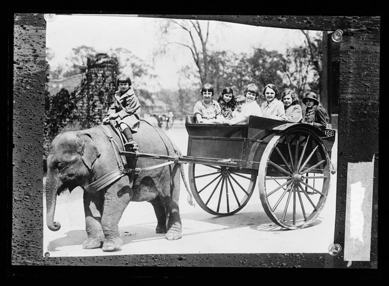 Sheba the Elephant gave countless children wagon rides during her time at the Belle Isle Zoo