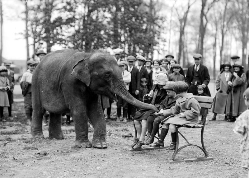 Sheba being fed by children at the Belle Isle Zoo in 1924.