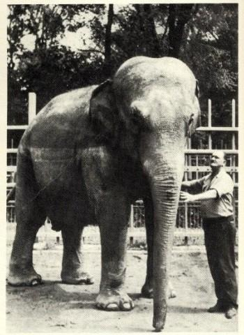 Sheba the Elephant with animal keeper Willard Schmidt