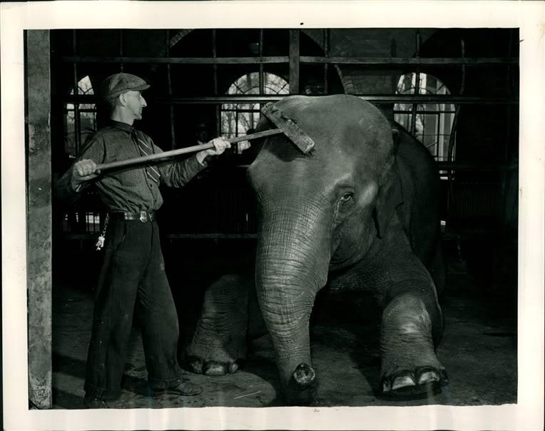 Sheba the Elephant with zookeeper Arthur LeBeau at the Belle Isle Zoo in 1939.