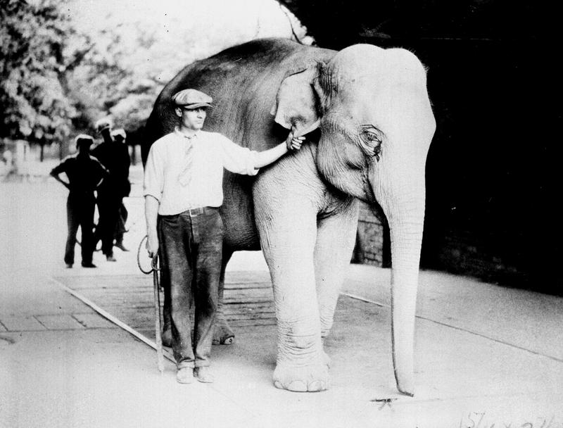 Sheba at the Belle Isle Zoo (undated)