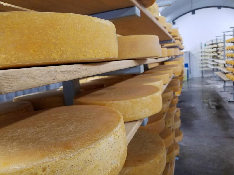 Raclette cheese wheels age in the cellar of Leelanau Cheese Company in Suttons Bay. The company was recently awarded a Super Gold award at the World Cheese Awards in Spain.