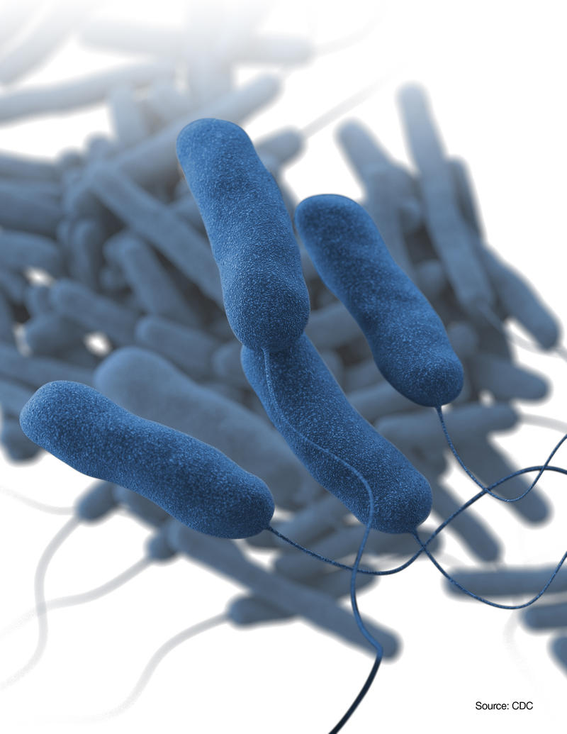 Illustration of Legionella pneumophila, the bacterium that causes the majority of Legionnaires disease cases and outbreaks.