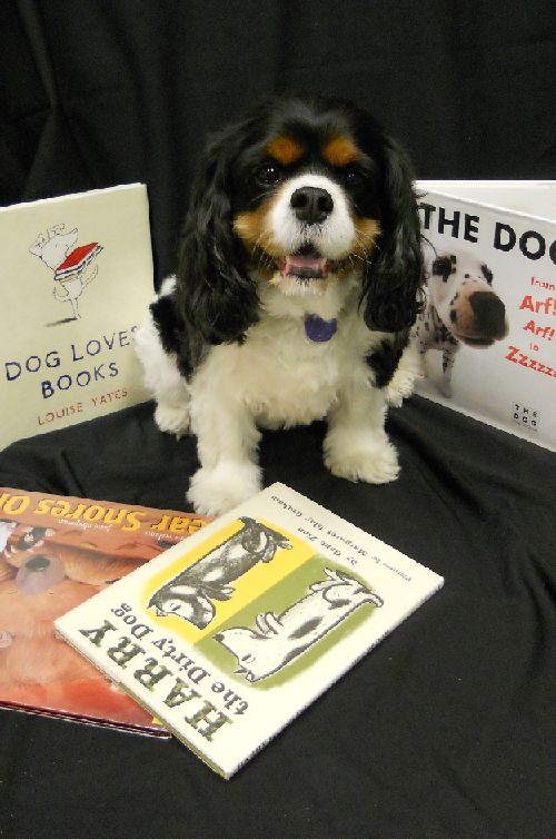 Lily, Highland Township Public Library's dog, sits in the middle of some books about dogs.
