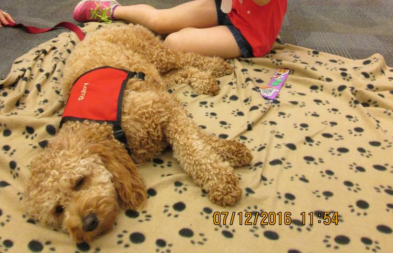 Ruby,one of two library dogs at the Pinckney Community Public Library, lies on the floor.