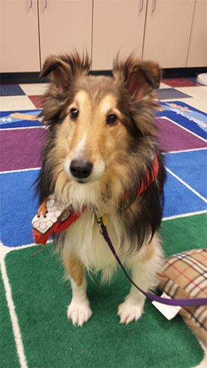 A collie named Tippy sits on a rug at the Sterling Heights Public Library
