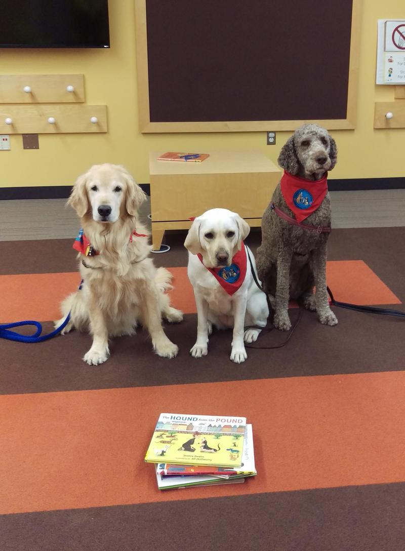 Three dogs with a stack of books in front of them