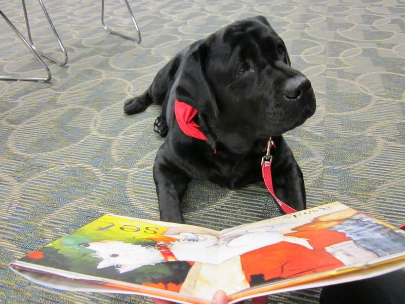 Vedder is a black dog reading a book at the Saline District Library
