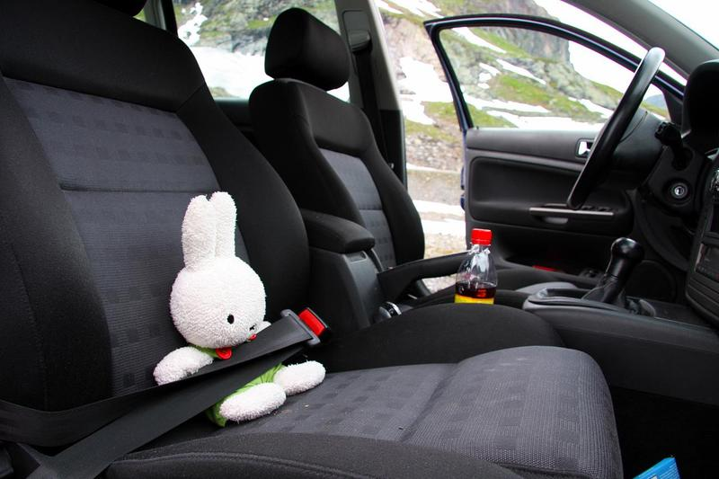 stuffed animal buckled in seat belt
