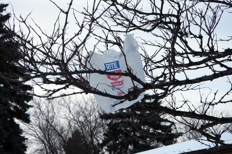 Plastic bag in a tree.