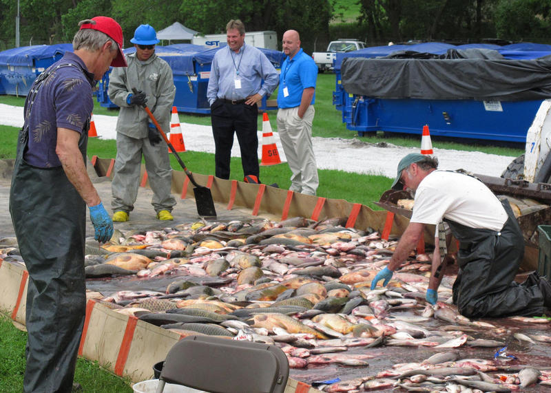 LANSING, Ill., -- SET Environmental Group personnel conduct fish-sorting and disposal operations near the T.J. O'Brien Lock and Dam after Rotenone application during the multi-agency sampling operation here, May 20, 2010.