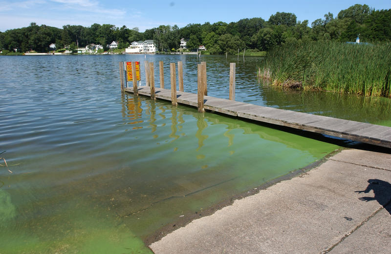 dock surrounded by green water