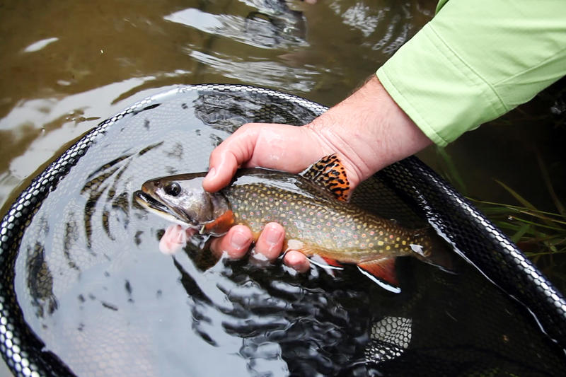 The group Trout Unlimited began on July 18, 1959.