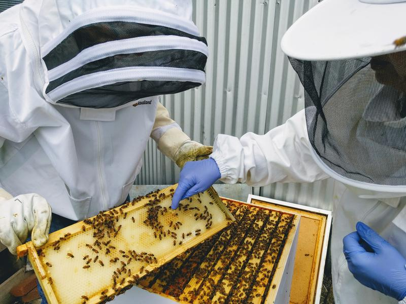 Two beekeepers looking at a frame.