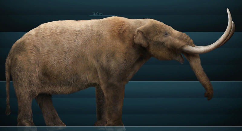 This rendering is a graphical reconstruction of Mammut americanum, a.k.a. an American mastodon, based on bone structure and paleontological texts.