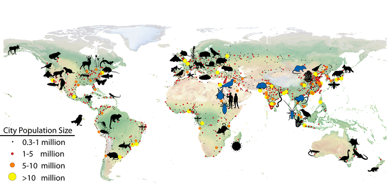 Map of animals that have evolved in cities.