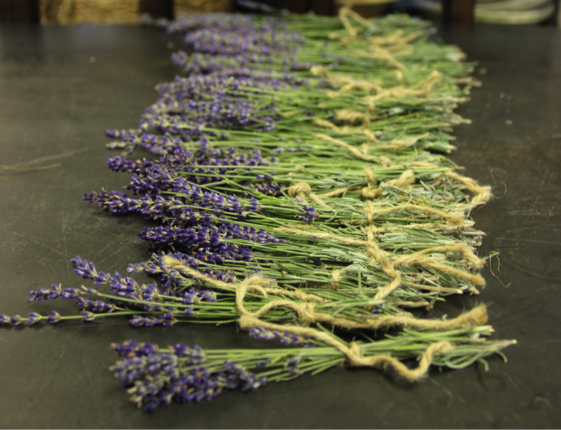 Lavendar available at the Michigan Flower Growers Cooperative, from Donna Tope of Melissa & Mom's Lavendar