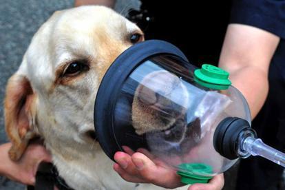 Pet Oxygen Masks for BC Firehalls Fund