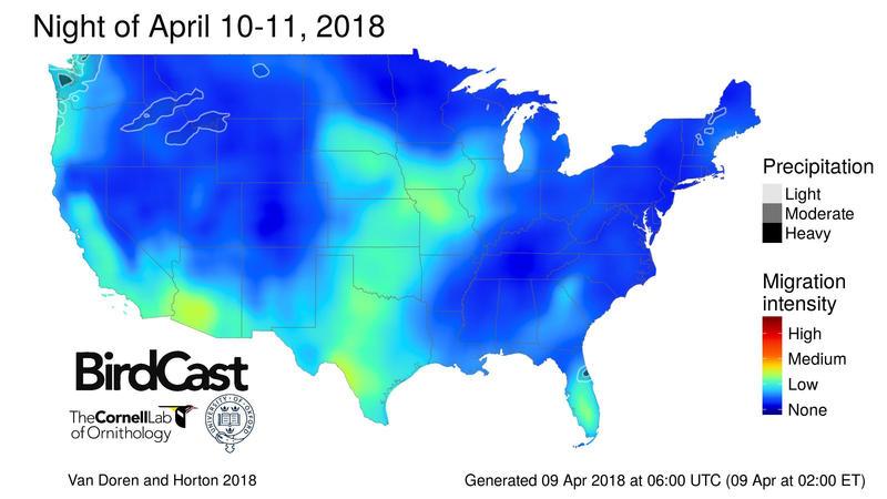 A snapshot of BirdCast's migration forecast.