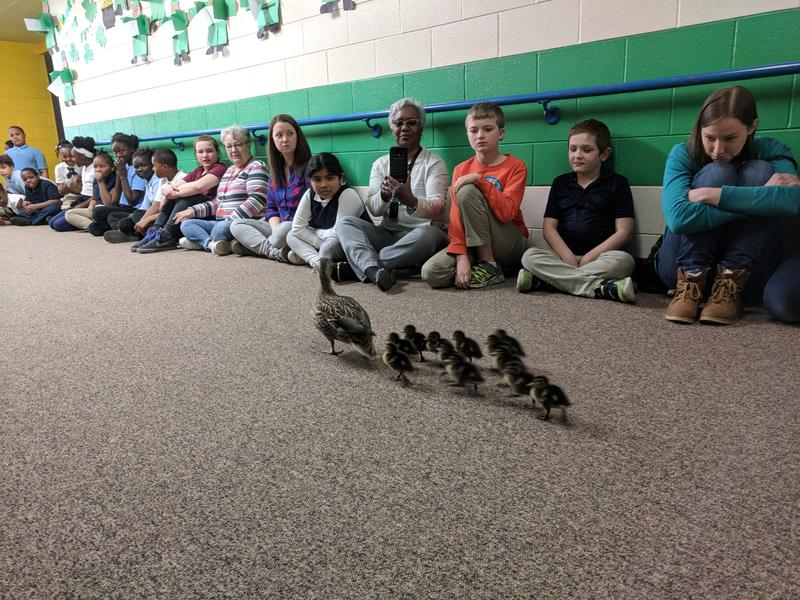 Students in the hallway looking at ducks