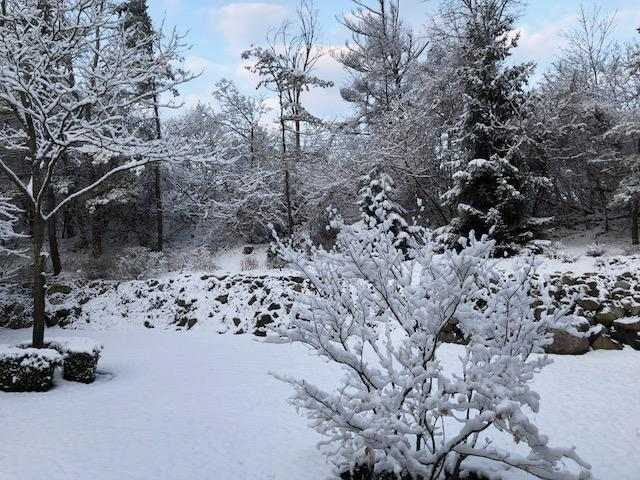 The snowfall in host Cynthia Canty's backyard on Tuesday morning, April 10.