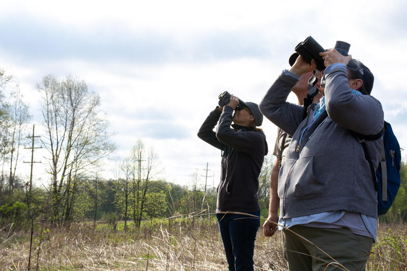 Juliet Berger and other birders look through their binoculars at a warbler.