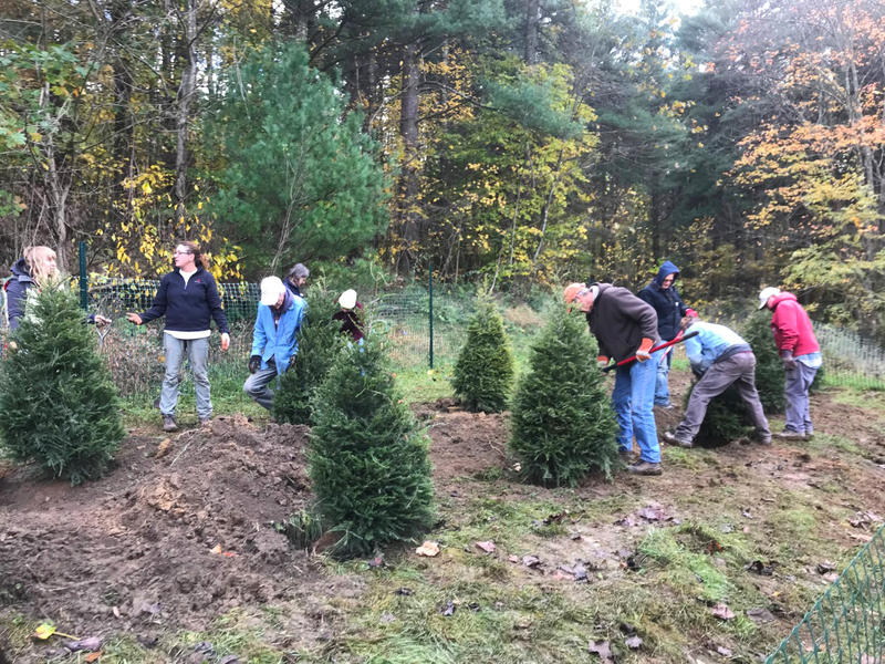 Western Pennsylvania Conservancy volunteers plant hemlocks for the Ln beetle insectary in October, 2017.