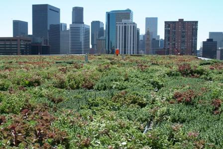 A green roof can help reduce the heat island effect.