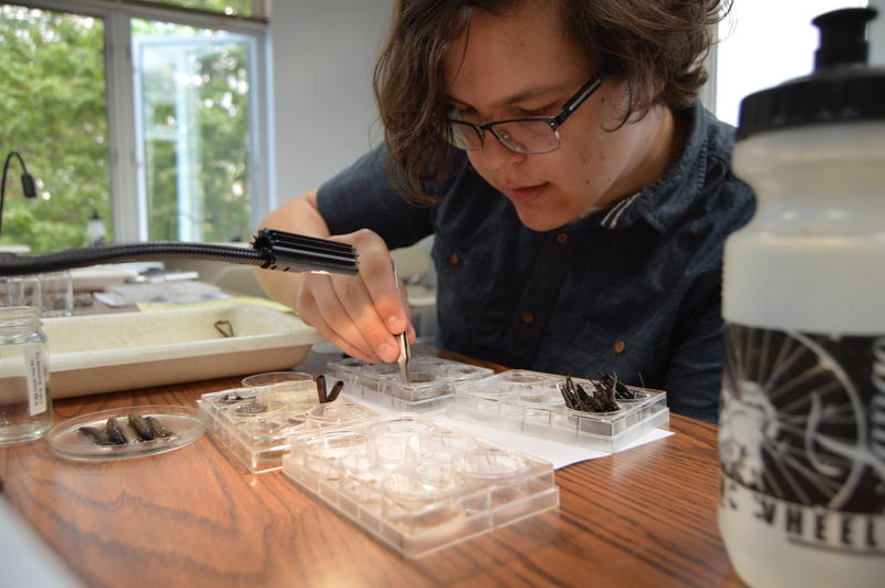 Nicholas Krantz says he loves bugs. He's sorting through samples collected from the Huron River watershed.