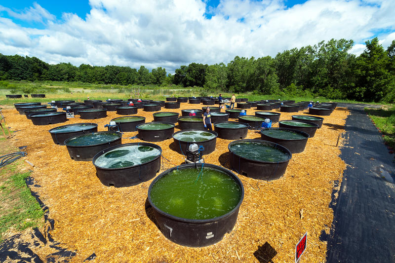 field with tubs filled with green liquid