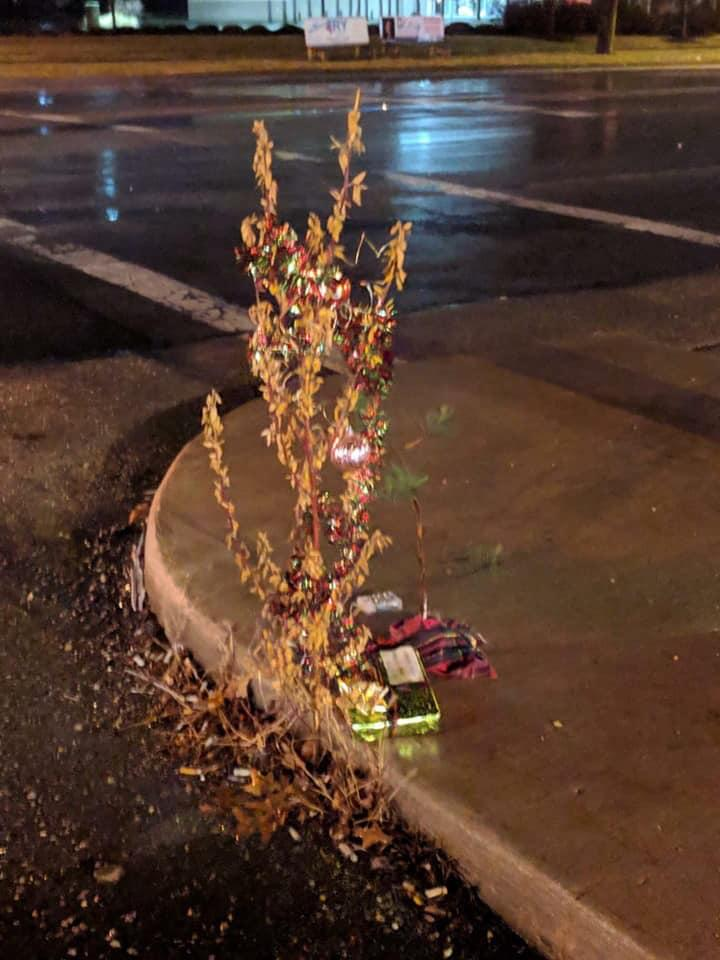 Toledo christmas weed with just a string of lights
