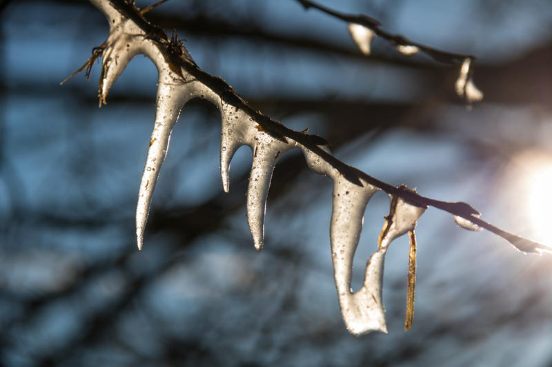 Ice on a tree branch