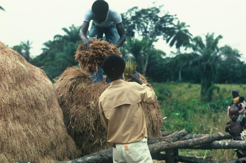 Liberian villagers harvesting in the early 1960's