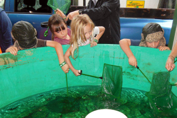 Kids helped net small sturgeon raised at the facility at a release party last week.