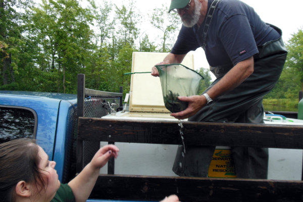 The small lake sturgeon are collected from the DNR truck and taken to be released into the Black River.