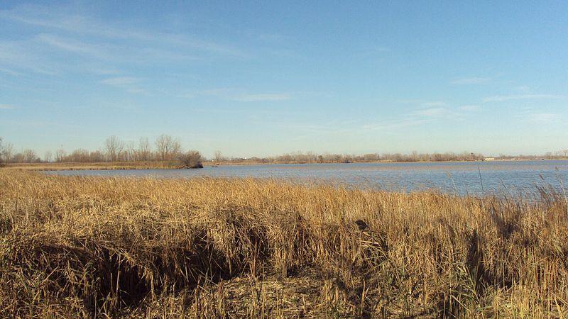 Maumee Bay wetlands in the Detroit River International Wildlife Refuge.