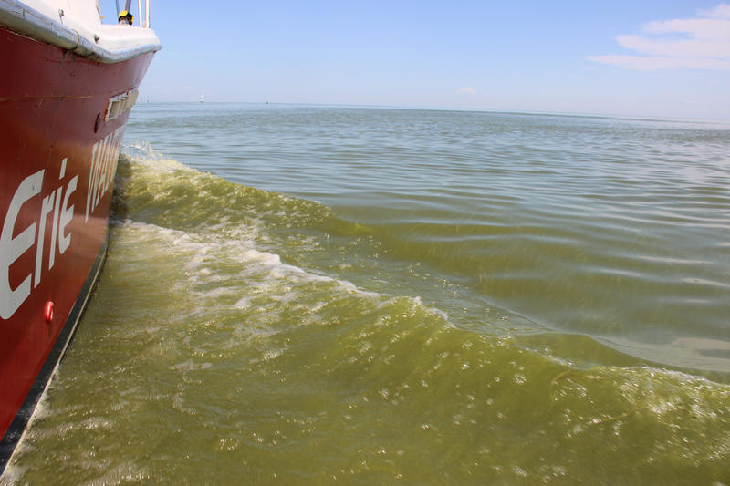 A cyanobacteria bloom on Lake Erie in 2013.
