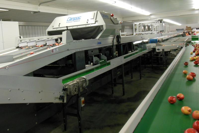 A machine scans and sorts the apples according to weight, color and defects.