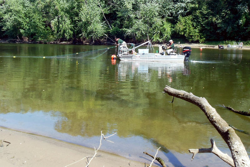 DNR fishery technicians deploy gill nets to trap common carp during the drill.