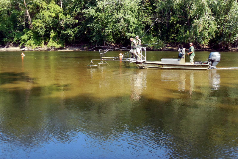 DNR fishery technicians at the front of the boat look for stunned carp to net during an electrofishing drill in the St. Joseph River.