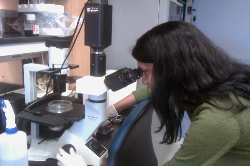 Dr. Madhuri Kakarala looking at stem cells from human breast tissue. Women voluntarily donate their tissue after various breast surgeries for research.
