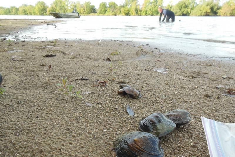 Dunn's crew crawls around on all fours, feeling for freshwater mussels for their survey.
