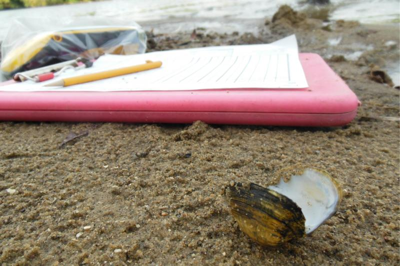 The snuffbox mussel was listed as an endangered species in 2012.