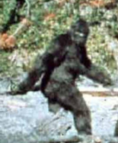 An alleged Bigfoot in the famous Patterson-Gimlin film from 1967
