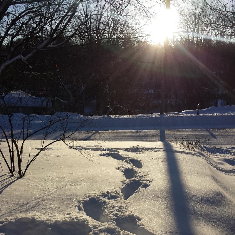 Sunrise on a snow day in Ann Arbor.