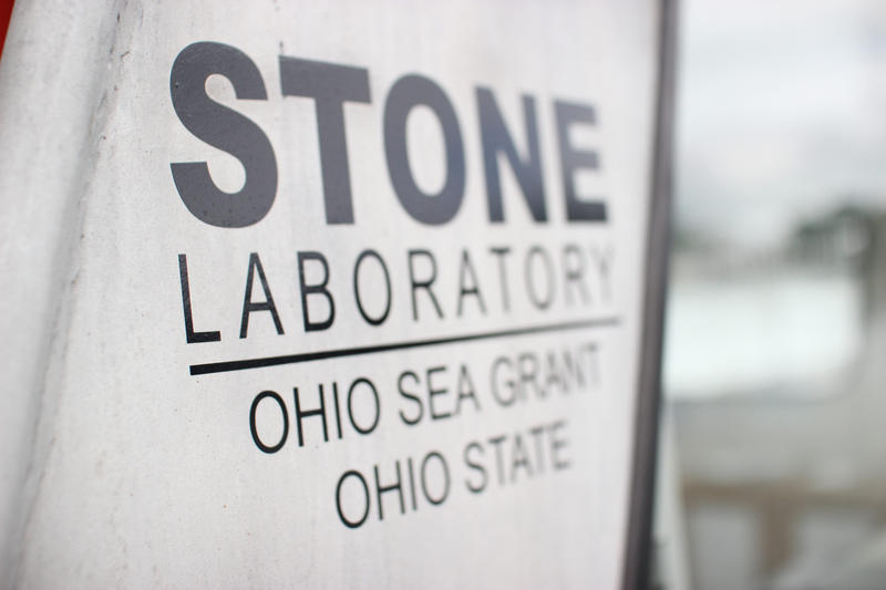 Researchers at Ohio State's Stone Laboratory are looking into how the increased algae blooms affect fish.