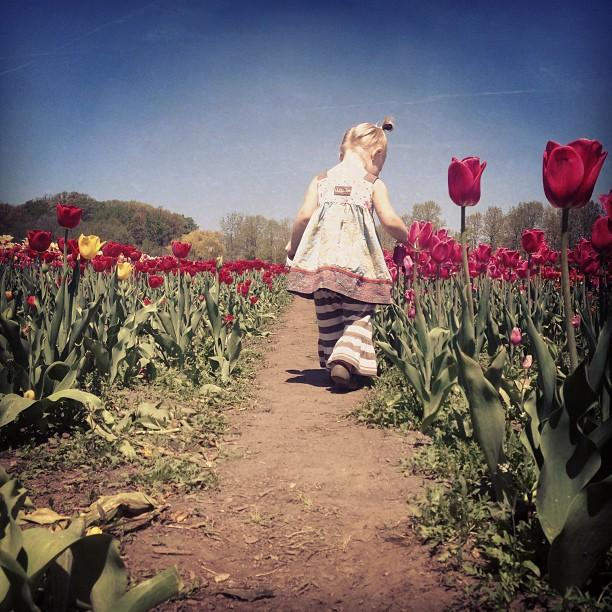 Tulip Time has been celebrated since 1929.